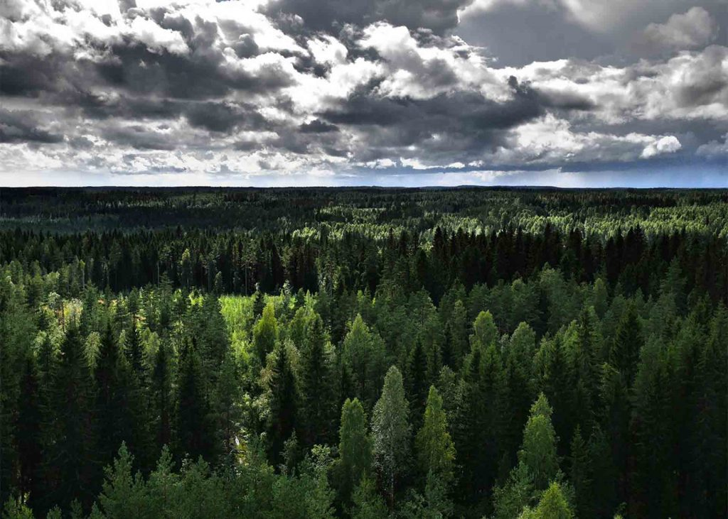 Boreal forest on a partly cloudy day in Canada
